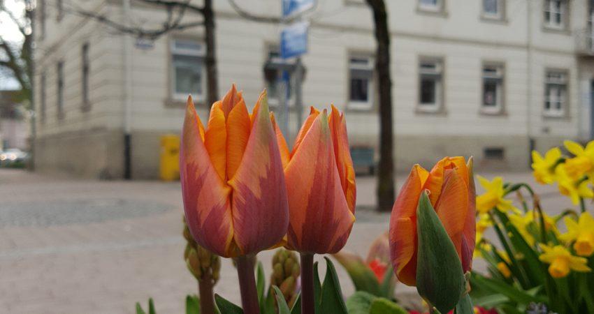 Das ehemalige Bezirksamt von Schopfheim mit einem Blumenkübel im Vordergrund.